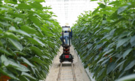 Agricultura de Precisión Inteligente 4.0